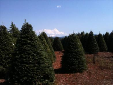 Ojai Lions Members flew to Oregon to view 2011 trees as they grow!